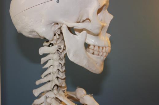 anatomie-machoire-craque