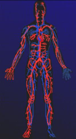 hormones-corps-osteopathie