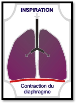 contraction-diaphragme-inspiration-etape-3
