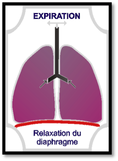 relaxation-diaphragme-expiration