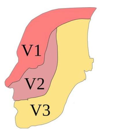 racines-nerveuses-nerf-trijumeau